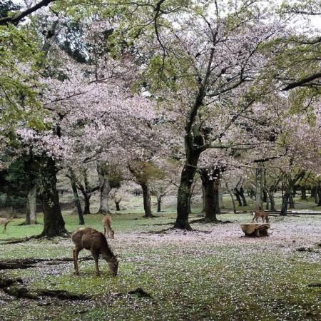 Nara2015_IsaMilk