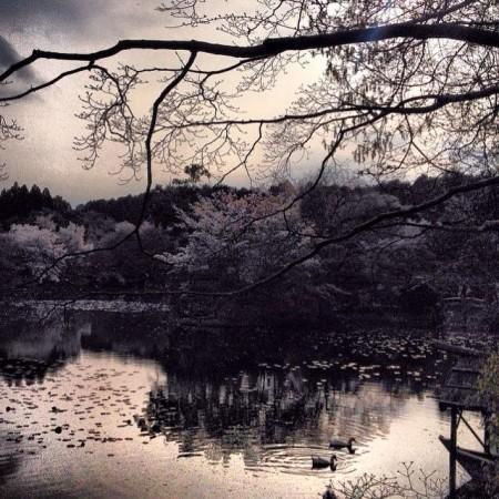 kyoto_isamilk_2015